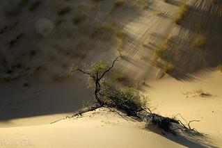 Kalahari sand dunes
