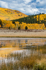 Sitting Ducks (Travis Klingler (SivArt)) Tags: danballard workshop fallcolors
