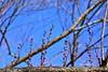 Jin_a06217 (Chen Liang Dao 陳良道 hyperphoto華藝影像網) Tags: 台灣 台灣風景 台灣影像 數位攝影 台灣圖庫 圖庫 風景攝影 風景 旅遊 休閒 觀光景點 室外 戶外 自然 環境 vacation 度假 亞洲 東方 圖像 相片 地標 台中市風景 台中市地標 台中市旅遊 台中市觀光 台中市景點 台中市地理 台中市 台中 和平區 武陵農場 武陵遊憩區 武陵森林遊樂區 武陵國家森林遊樂區 國家森林遊樂區 森林遊樂區 高山農場 雪霸國家公園 國家公園 松樹 梅園 梅花 春天 花卉 開花 特寫 紅梅 陳良道