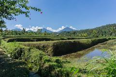 _DSC3826_Bali_09_16 (Saverio_Domanico) Tags: bali indonsie munduk voyage