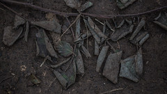 Fading away VI (Rita Rodner) Tags: fading away decay autumn leaves leaf dying soil earthy muted dark