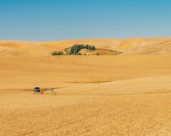 Glutinus Maximus (Pedalhead'71) Tags: uniontown washington palouse wheat