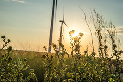 West Texas Morning (7 of 40) (mharbour11) Tags: wildcats elk purple sunrise westtexas texas sky windturbines windmill sun silhouettefire silhouette