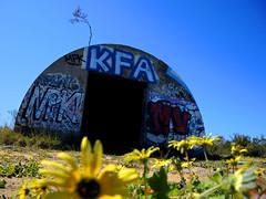 GraffitiBunker (Lu(a - Life in a shot) Tags: bunker wwii guerra mondiale world war margherite kfa npk mv tag graffiti daisy daisies wa western australia perth yancheo yachep trail hiking bushwalking bush trekking path can blue sky yellow field spy