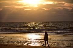 Together (Pics4life.nl off and on next week) Tags: goldenhour nature september beach seagull woman sky sunset light gold sea strand zee goudenuur zeemeeuw vrouw netherlands nederland holland nl zonlicht zonsondergang scheveningen