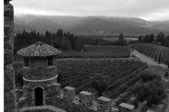Castello di Amorosa - Vineyard (raluistro) Tags: calistoga winetasting napavalley winecountry castellodiamorosa