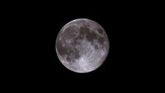 Armstrong Blue Moon, Friday, August 31, 2012 (Stephen Little) Tags: mirror reflex mirrored bluemoon augustmoon catadioptric fullsturgeonmoon fullredmoon grainmoon greencornmoon minoltaaf500mm minolta500mmf8 fullaugustmoon minoltaaf500mmf8 100offull sonya77 minolta500mm jstephenlittlejr slta77 sonyslta77 sonyslta77v sonyalphaslta77v armstrongmoon