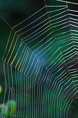 The Web (C-Dals) Tags: nikon web spiderweb nikkor 70300mmf4556gvr d5100