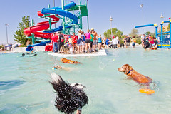 Skunk Dive :) (Anda74) Tags: pool colorado funny angle wide dive diving september swimmingpool bordercollie ouzo parker plunging barkerdays