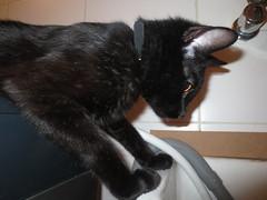 Water flowing!! (Natushhhhh) Tags: pet cats blackcat kitten feline gato purr felino chatnoir gatonegro gatopreto gattonero purry