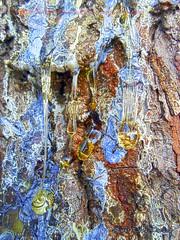 Illa de Arousa (Luis Diaz Devesa) Tags: espaa paisajes tree verde green nature water spain agua rboles europa galicia galiza pinos pontevedra illadearousa isladearosa carreirn luisdiazdevesa