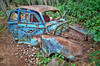 That Won't Buff Out, Stuart Island, San Juan Islands [Explore] (tacoma290) Tags: blue vacation abandoned car forest nikon crash decay rusty pacificnorthwest sanjuanislands pnw stuartisland shotgunholes thatwontbuffoutstuartislandsanjuanislands explore25sep12
