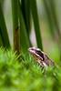 _MG_0478 (Den Boma Files) Tags: fauna dieren kikker amfibieen stropersbos