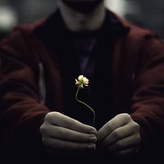 Te regalo un mundo (_Zahira_) Tags: flower lafotodelasemana hands dof flor olympus manos desenfoque 50mmf18 e500 uro ltytrx5 ltytr1 50mmom fsuro