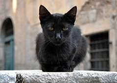 Kotor  Feral Cat (Stuart Axe) Tags: cats cat kitten kittens stray montenegro feral kotor