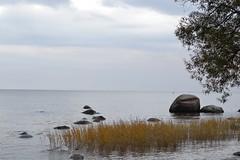 Contemplate (Lo766) Tags: autumn sea fall nature 50mm nikon sweden 2012 odc ourdailychallenge odc3 lo766