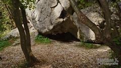 Ein schwerer Stein (MathiasK. Fotografie) Tags: sand ast fotografie sony laub pflanzen grau steine 1855mm grn fels braun holz ste mathias wald stein bume baum boden stamm gestein karner duundich mathiask wwwmathiaskarnerat wwwduundichphoto