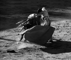 Jos Carlos Venegas (aficion2012) Tags: ceret 2016 saltillo corrida france francia toro toros toreaux bull fight torero toreador matador bw monochrome monotone