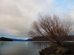 Guardian of the Lake (forbiddenskies) Tags: tree lake singular mountains nature dramatic clouds queenstown lakewakatipu newzealand aotearoa guardian serene calming