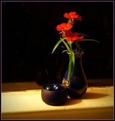 Night light (edenseekr) Tags: red flowers windowsill vase stilllife onblack