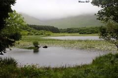 Parc national du Connemara (mareenrcd) Tags: connemara kylemore lake mountains abbeye rainyday