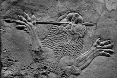 Assyrian lion hunt II, British Museum (arklologist) Tags: assyrian lion hunt british museum