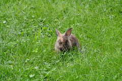 DSC_3418 (mavnjess) Tags: 15 june 2016 vicenza italy italia coniglio coniglios rabbit rabbits bunny bunnies