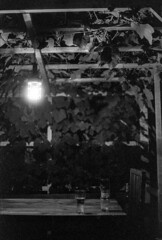 rural summer night feeling (brenkee) Tags: rural summer night glasses light grape grapevine canon av1 kodak academy 200 bw blackandwhite monochrome film analog dark fd 50mm 14 lc29 self developed