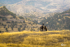 Mare and foal bond - Kurdistan (KORAK AGHA) Tags: kurdistan mare horse foal nature animals nikon nikkor manual 135mm d600 ais