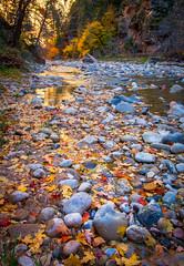 Fall on the Virgin River (brianconnollyphoto) Tags: 2014 thenarrows utah virginriver zionnationalpark fall