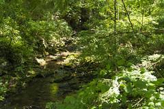 DUG_7265r (crobart) Tags: fallingwater frank lloyd wright kaufmann bear run nature reserve pennsylvania