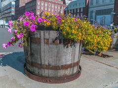 Flower Planter In South Street Seaport Area NYC (nrhodesphotos(the_eye_of_the_moment)) Tags: dsc08106300 theeyeofthemoment21gmailcom wwwflickrcomphotostheeyeofthemoment planter plantlife nature flowerpot historical windows displays shadows mall sidewalk wood metal southstreetseaport vintage architecture streetscene nyc manhattan pottedplant plant flowerbed flower outdoor