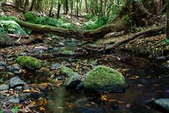 LaGomera2016 (yeray.ventura) Tags: bosque cedro paisaje naturaleza agua rio riachuelo corriente largaexposicin verde