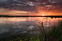 Swimming at sunset (CreArtPhoto.ro) Tags: apus comana apa cer nori verde