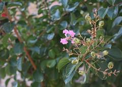 Flower - Telephoto Shot (AnnaSodaroArt) Tags: 2016 a2 focallength arts361002