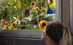 SUNFLOWER DREAMING (panache2620) Tags: sunflowers yearning longing freedom woman creative imagination city urban street bus conceptual thinking flowers yello eos sl1 50mm18mphotojournalism reflecting dreaming dream meditating explorer