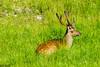 DSC_9594 (Costi Jacky) Tags: france naturereserve parcdemerlet