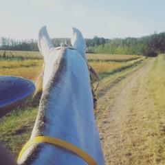 #cuadraelalisal #Hidalgo #ride #horseriding #endurancehorse #CEIopennegrepelisse
