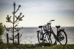 Two Bikes And A Sappling (Mabry Campbell) Tags: 2bikes 200mm 2012 europe houstonphotographer mabrycampbell malmö may scandinavia skane skåne sweden architecturalphotography architecturephotography bicycle bicycles bike bikes blue coast coastal commercialphotography editorialphotography fineartphotographer fineartphotography green greengrass image malmo photo photograph photographer photography saltwater sapling southsweden southernsweden spring springtime sverige tree västrahamnen water westernharbor f28 may202012 201205200471 ¹⁄₈₀₀₀sec 100 ef200mmf28liiusm