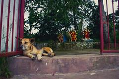 Guardian Of Faith (Turn2PageLIFE) Tags: street dog india gate asia god faith guard streetphotography lord streetphoto hindu hinduism shillong citystreet candidphoto streetdog northeastindia streettogs