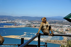 Enjoying The View (Simon Downham) Tags: seascape port marina landscape monkey athletic spain view gib cheeky ape gibraltar tame airstrip algeciras rockofgibraltar agile barbarymacaque semiwild britishterritory dsc5147a1x