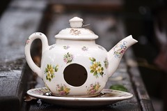 Rainy Day (TreasureDoesntTry) Tags: flowers wet rain pretty birdhouse teapot