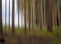 noch ein Wald (Werner Schnell Images (2.stream)) Tags: wood forest woods wald ws