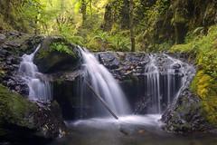 Jewel of a Place (Darrell Wyatt) Tags: trees green fall water creek waterfall columbiarivergorge emeraldfalls gortoncreek