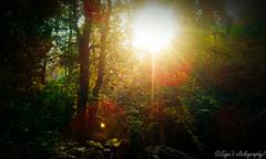 Sun rise in forest! (sugavinesh1) Tags: sun set forest canon photography colourful rise suga kerela 600d vythri sugavinesh