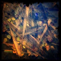 Hear Me Calling (Krogen) Tags: autumn oktober nature norway norge october natur norwegen noruega scandinavia akershus høst romerike krogen noorwegen noreg ullensaker skandinavia jessheim nordbytjernet olympuse3 tvisyn