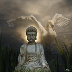 Buddha and the swan (Mara ~earth light~) Tags: life light inspiration love photoshop swan energy heart buddha gimp clarity grace divine mind soul creativecommons universal spirituality protection intuition soulscapes mara~earthlight~ fugitivemoment
