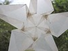 Close Up Of White Star