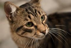 Istanbul cat (hypnoscope) Tags: street city wild cats cat turkey kitten feline fuji kitty kittens istanbul stray pro citycat feral tomcat s5 citycats fujis5pro