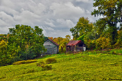 Barns In Fall (The Lovelace Photography) Tags: autumn nature barn natureza thegalaxy mygearandme flickrstruereflectionlevel1 rememberthatmomentlevel1 bewiahn